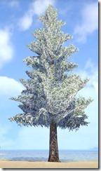 Tree, Towering Snowy Fir 1