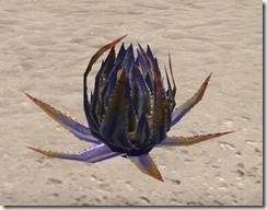 Plant, Marsh Aloe Pod 1