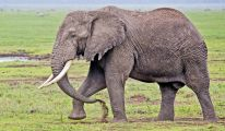 _E7A1000 Ngorongoro elephant web ready