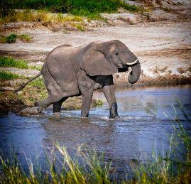 _E7A8396 Elephant vignette web ready