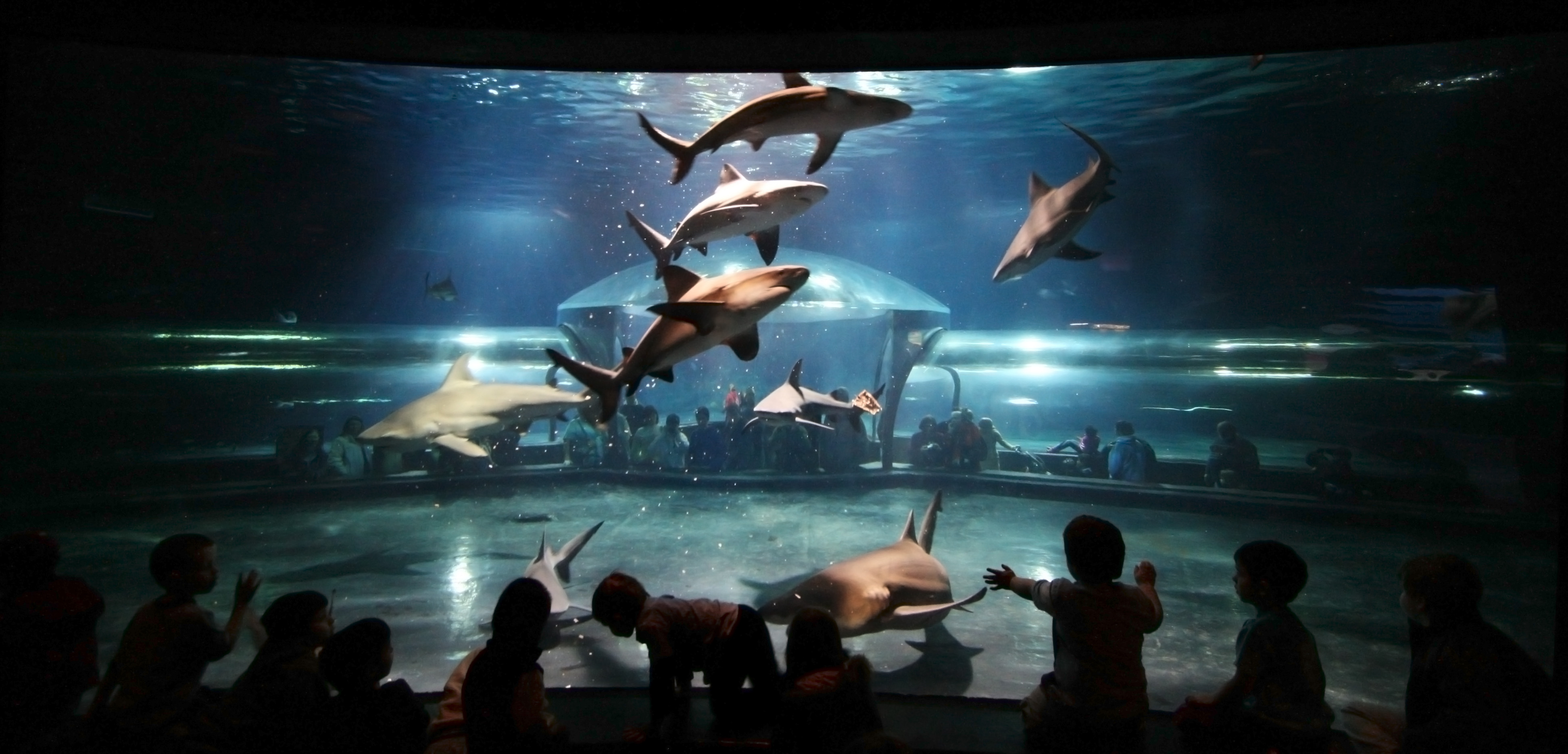 Oklahoma Aquarium Selects Local Woman Contest