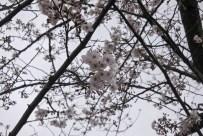 Fukuoka-DSC_6001-b-kl