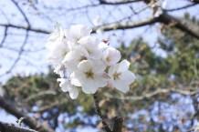 Fukuoka-DSC_6109-b-kl