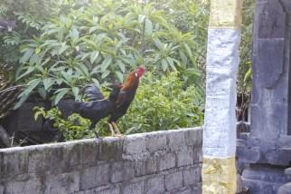 Nach-Padangbai-DSC_7810-b-kl