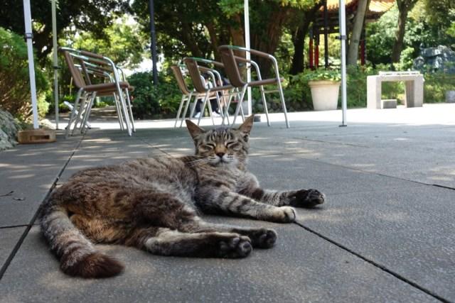 庭園内の猫。涼しそう