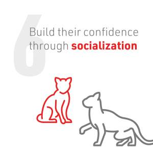 7_Cat2Vet-2021-CarrierAcclimationTips-Social