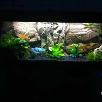 Décor de fond amazonien Aquarium 150