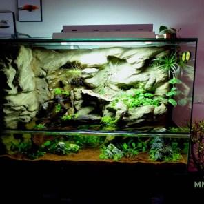 Aquaterrarium 100/50/60