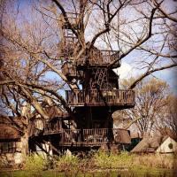 Tucker's Tree House