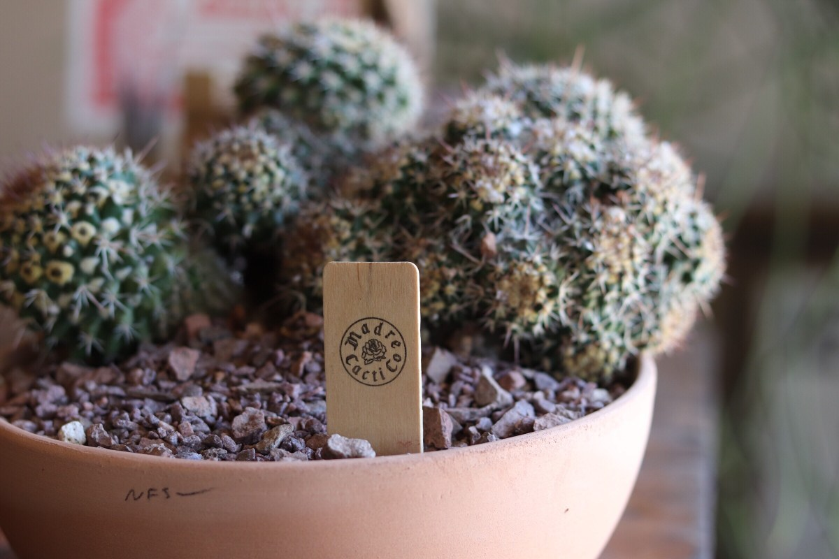 Madre Cacti Co.
