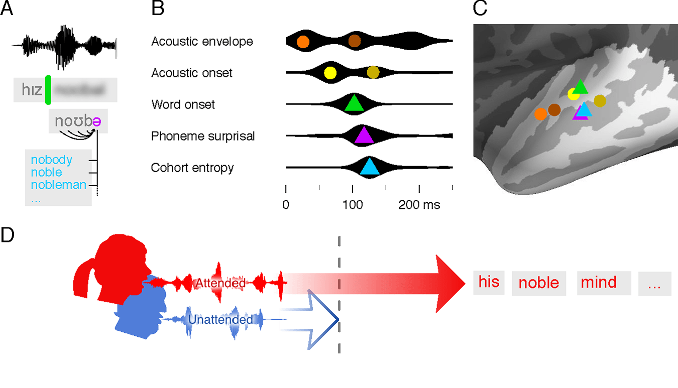 hight resolution of a illustration of the main properties of speech processing that were used to model brain responses detection of word onsets green prediction of the