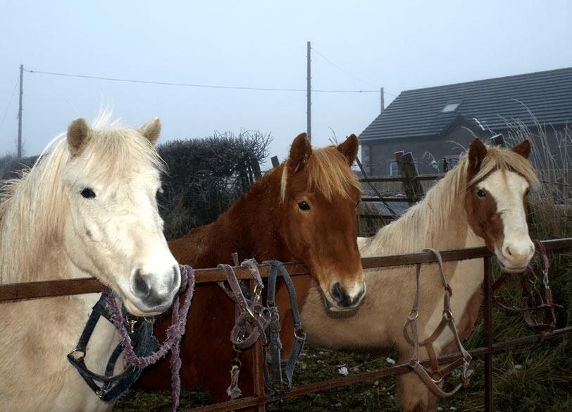 Island Equestrian Centre 1
