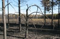 Palsburg Fire burn area V. Credit: Steve Mortensen, Julie Palkki
