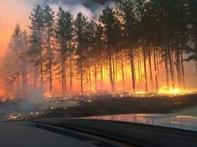 Burning Trees Palsburg Fire April 15, 2015. Credit: Tyler Fish