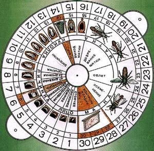 Вывод пчелиных маток сколько дней выводится график вывода как вывести