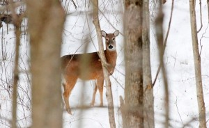 deer2L