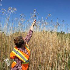 Rangers rally to remove invasive plants along Highway 17