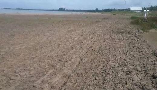 With plovers gone, SBP starts raking Sauble Beach