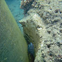 Piling and Coral, Tioman Island