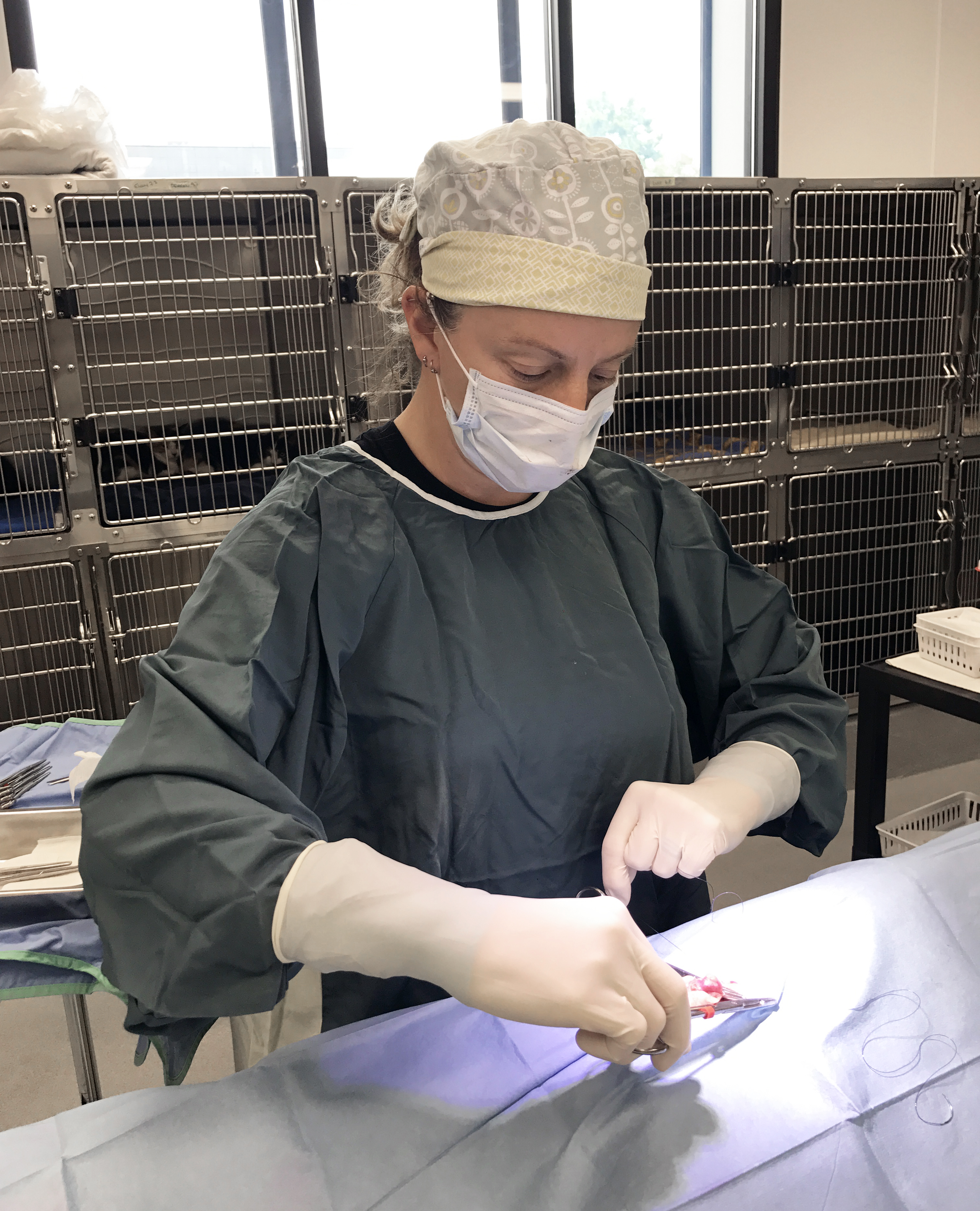 Register for Surgery - Low-Cost Spay/Neuter in MN