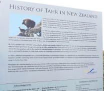 Information about the Tahr