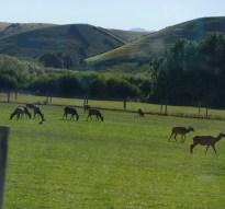 Deer Farm-taken from bus