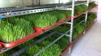 Photo of زراعة غزة.. مشاريع متميزة تتجاوز حدود الحصار