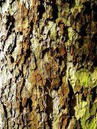 MoArt Tree Magic 116