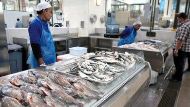 مهنيو قطاعي الفلاحة والصيد البحري يتعهدون بضمان استمرار الإنتاج وتوزيع المنتجات 6