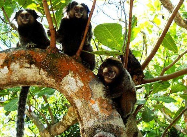 Pagando mico em Itapeba