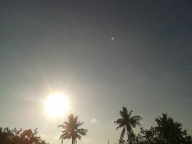 Morning sun_trees