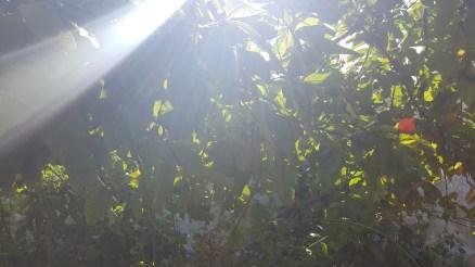 Sun lens_trees