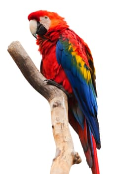 animal-ara-macao-beak-bird