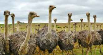 Bird-animal-nature-strauss