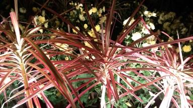 Flower-Tirumala