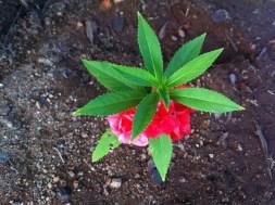flower_beautiful_nature