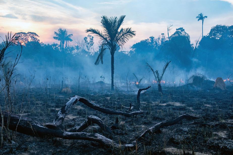 Augmentation de 28% des incendies en Amazonie brésilienne en juillet