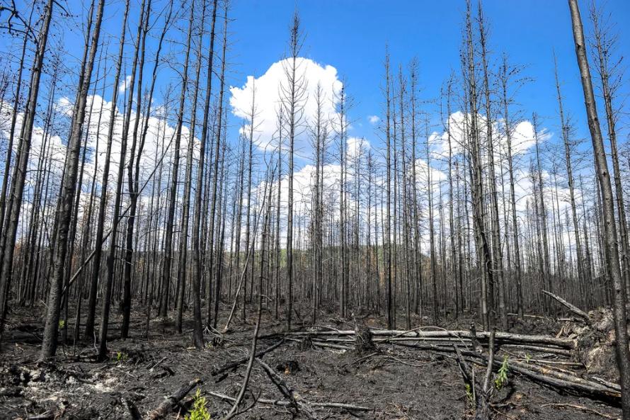 Lac-Saint-Jean: un incendie de forêt qui laissera des traces longtemps