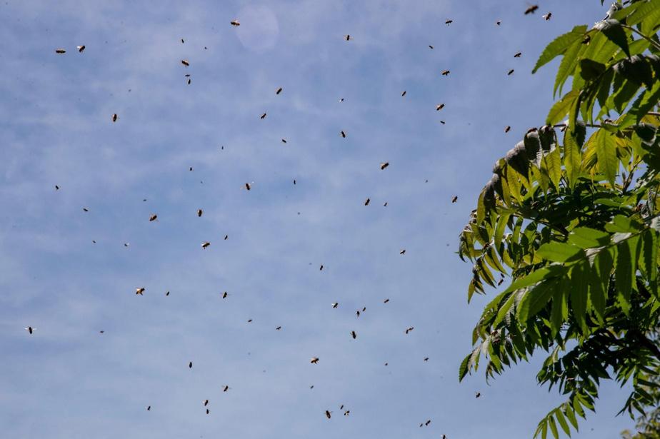 Un apiculteur de la Montérégie perd près de 600ruches: «Il pleuvait des abeilles»