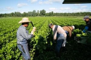 Dépistage de la COVID-19 | L'UPA dénonce le système fédéral imposé aux travailleurs étrangers