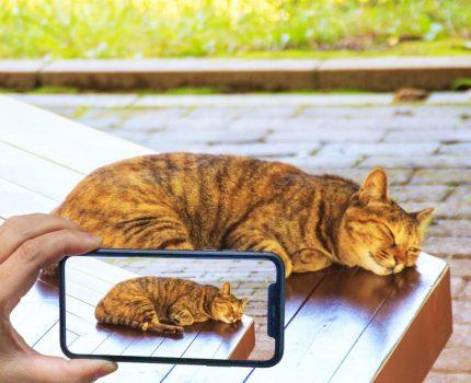 iPhoneで撮影した写真はパソコンで開けない?HEIC拡張子の写真をJPEGに変換する方法