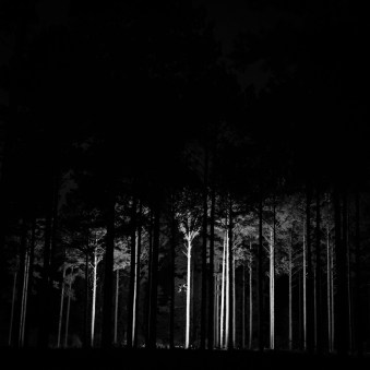 Lit pine forest after dark