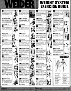 Weider home gym exercise chart pdf also mobile discoveries rh mobilediscoveries