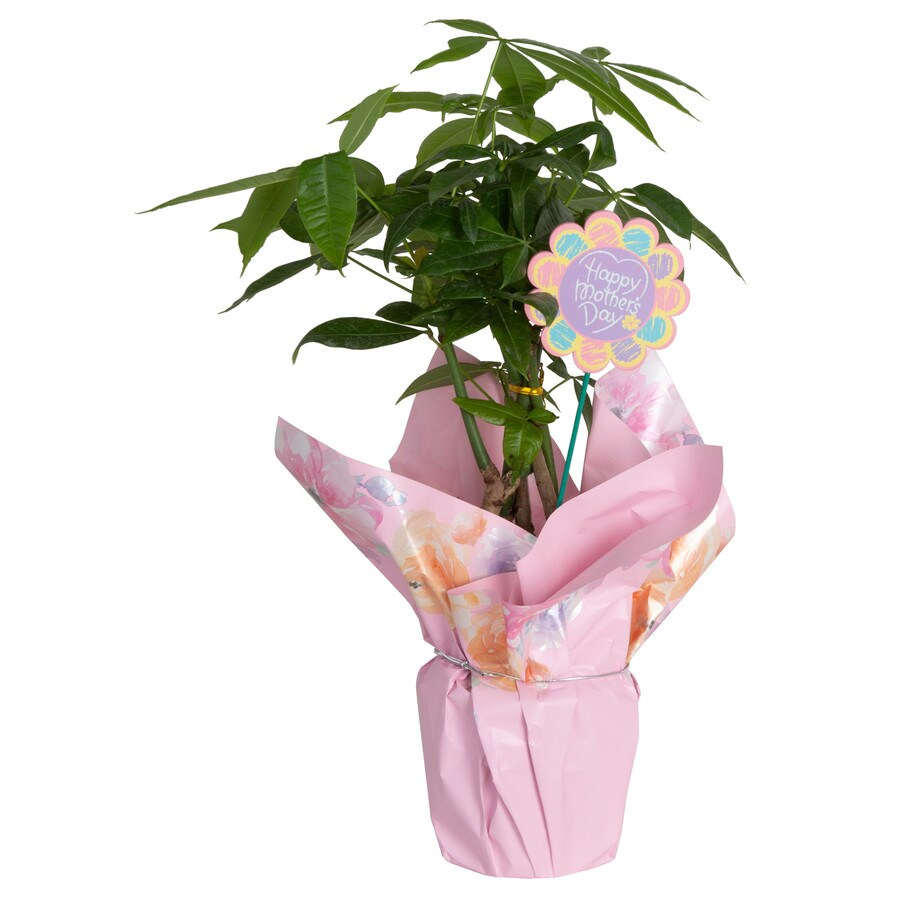 Tall Indoor House Plants