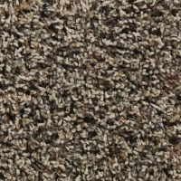 Shop STAINMASTER Active Family Austere Coolidge Textured ...