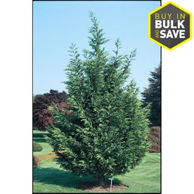 trees at lowes com