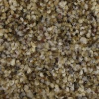 Shop STAINMASTER PetProtect Soul Mate 12-ft Textured ...