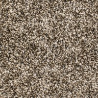 Shop STAINMASTER Essentials Bronson Playtime Carpet Sample ...