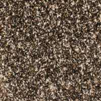 Shop STAINMASTER Essentials Bronson Scenic Beauty Carpet ...