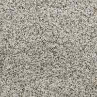 Shop STAINMASTER TruSoft Luminosity Sutton Carpet Sample ...
